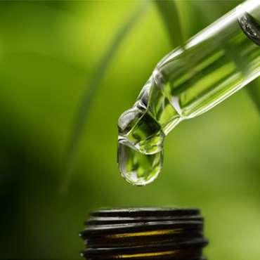 Is Copaiba Essential Oil The New Cannabis Oil?