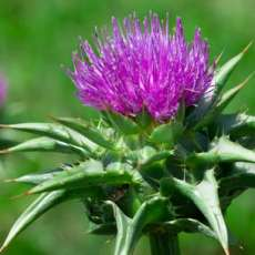 Love Your Liver With These Herbs and Foods – pH Clinic
