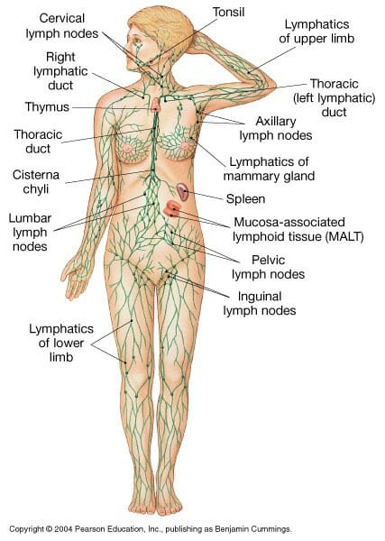5 reasons to get manual lymphatic drainage phclinic 5 reasons to get manual lymphatic drainage ccuart Gallery