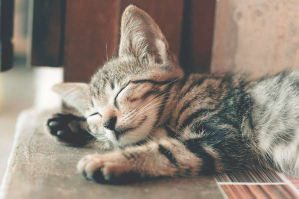 close-up-photography-of-sleeping-tabby-cat-1056251